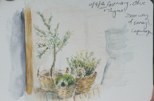 Rosemary, Olive and Thyme (watercolour - small sketch)