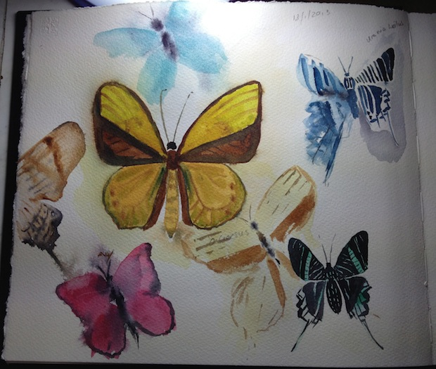 Sketchbook: butterfly study