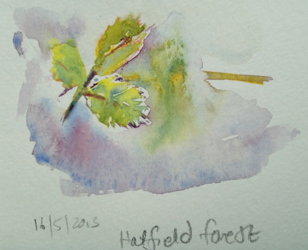 Spring Brambles watercolour sketch