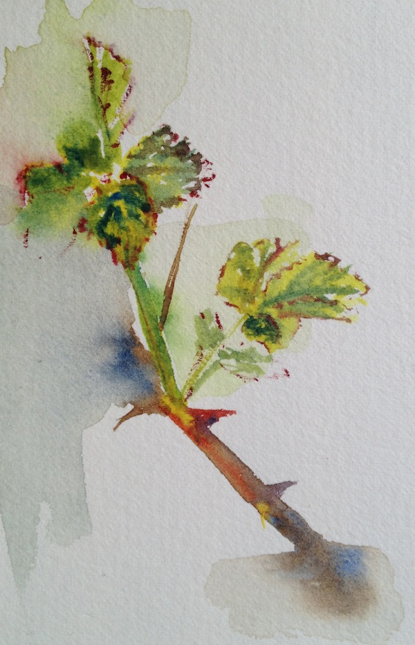 Spring Brambles 2 (watercolour sketch)