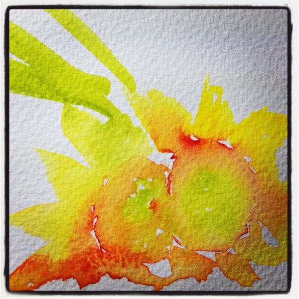 Picked daffodils - 3minute sketch. Daffodil studies