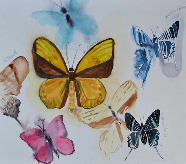 Lepidoptera - Limited Edition Print (35 x 30cm)