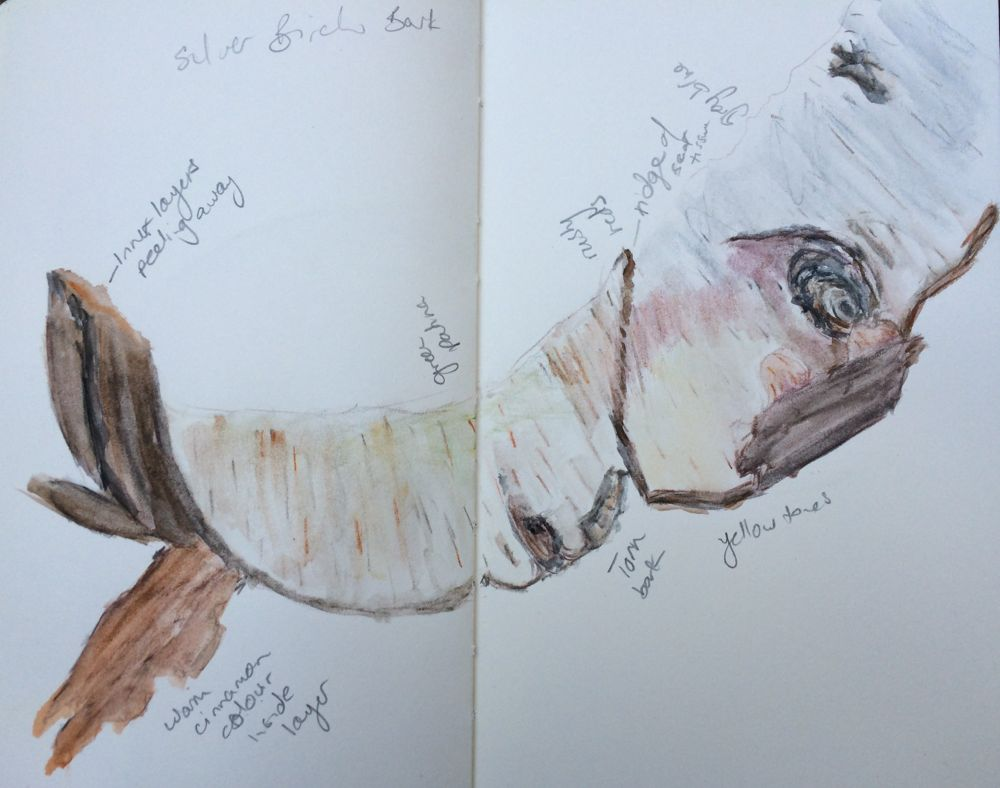 Painting colour - Silver birch bark sketch