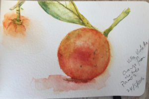 Oranges from the tree - from my Sketchbook