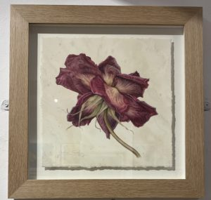Royal Institute of Painters in Water Colours exhibition - The Last Rose by Julia Trickey