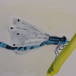 Damsel Fly in watercolour (15 x 10cm)