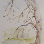 Tree in Watercolour. Old Man of the River (10 x 15 cm)
