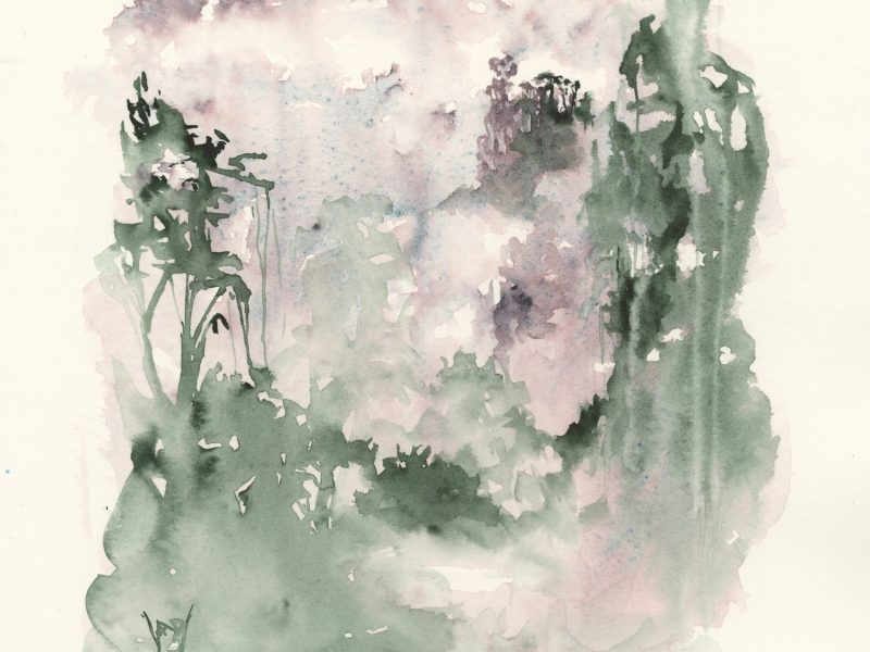 Rainforest Canopy. Watercolour by Vandy Massey