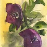 Two Hellebores - small watercolour by Vandy Massey. Part of a 1000 watercolour project.
